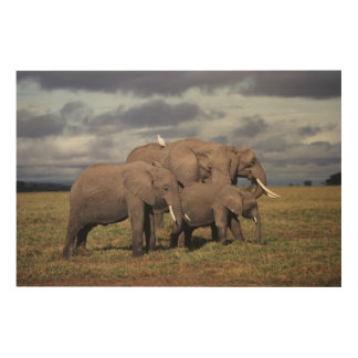 Baby African Elephant with family Wood Wall Art