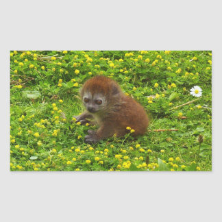 Baby Alaotran Gentle Lemur Rectangular Sticker