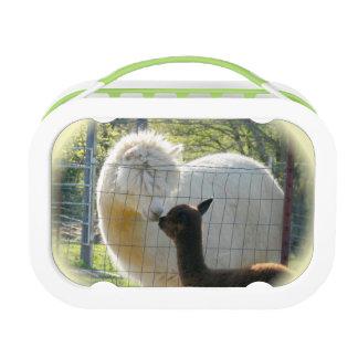 Baby Alpaca Kiss Lunch Box