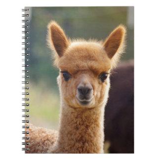 Baby Alpaca Spiral Notebooks