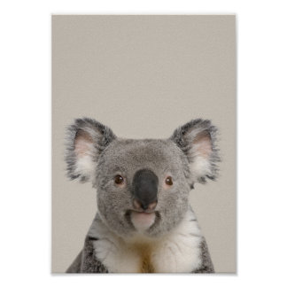 Baby Animals Nursery Poster - Koala