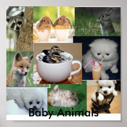Baby animals poster