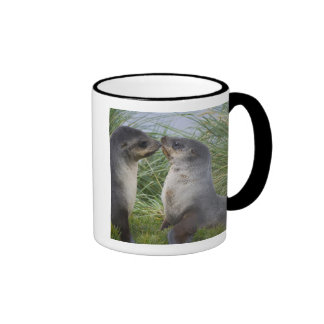 Baby Antarctic Fur Seal Arctocephalus Coffee Mug