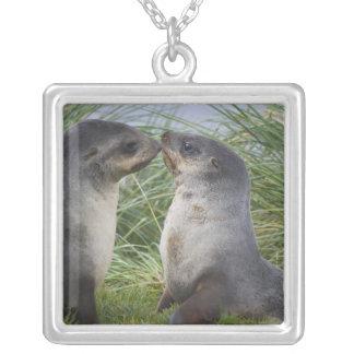 Baby Antarctic Fur Seal Arctocephalus Silver Plated Necklace
