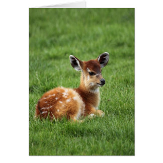 Baby Antelope Card