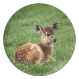Baby Antelope Plate