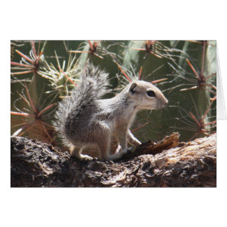 Baby Antelope Squirrel Card
