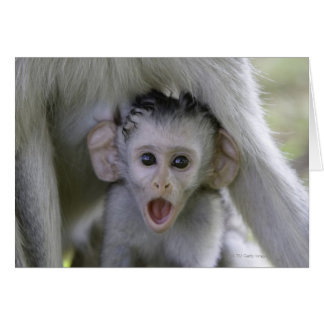 Baby baboon underneath its mother greeting card