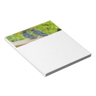 Baby Barn Swallows Nature Bird Photography Notepad