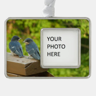 Baby Barn Swallows Nature Bird Photography Silver Plated Framed Ornament