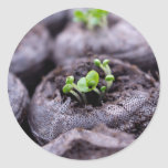 Baby Basil Plant Round Stickers