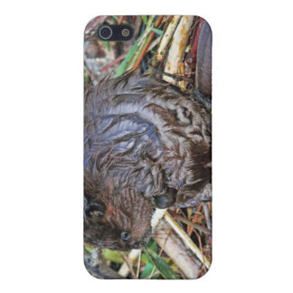 Baby Beaver Photo iPhone 5 Covers