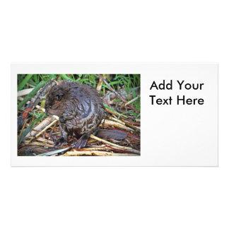 Baby Beaver Photo Personalized Photo Card