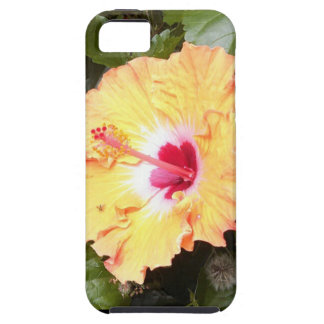 Baby Bee Beautiful Flower iPhone 5 Cases