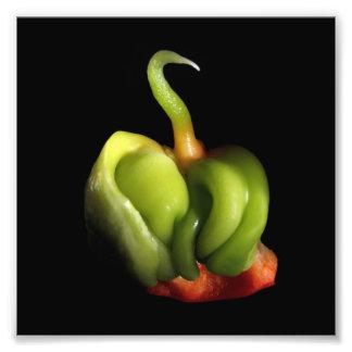 Baby Bell pepper Capsicum annuum Photo Art