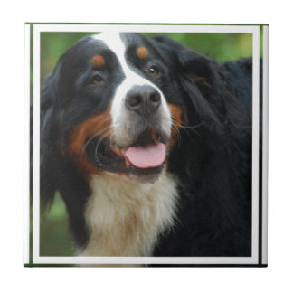 Baby Bernese Mountain Dog Small Square Tile