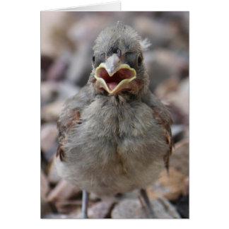 Baby Bird Attitude Card