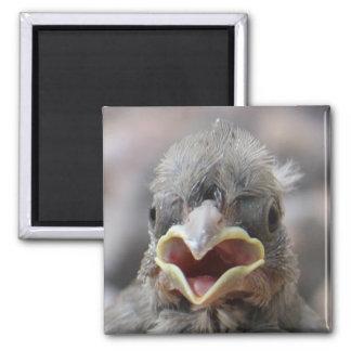 Baby Bird Attitude Magnet