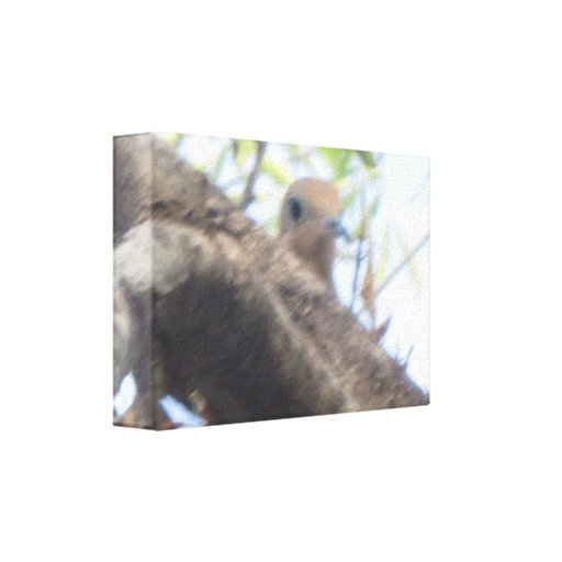 BABY BIRD IN NEST GALLERY WRAP CANVAS