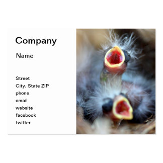 Baby Birds Pack Of Chubby Business Cards