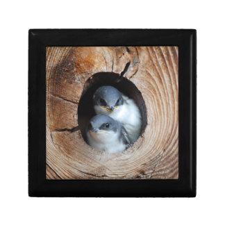 Baby Birds Gift Box