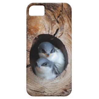 Baby Birds iPhone 5 Cover