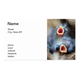 Baby Birds Pack Of Standard Business Cards