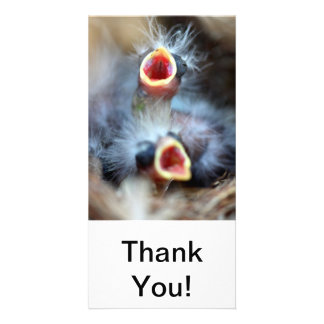 Baby Birds Customized Photo Card