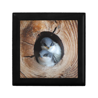 Baby Birds Small Square Gift Box