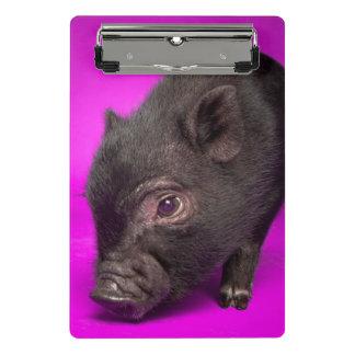 Baby Black Pig