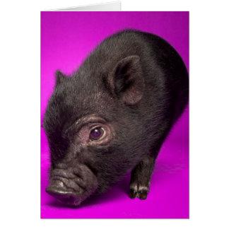 Baby Black Pig Card