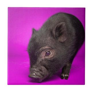 Baby Black Pig Tile
