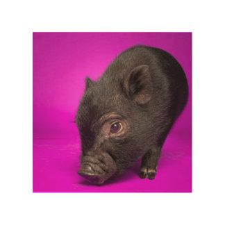 Baby Black Pig Wood Print
