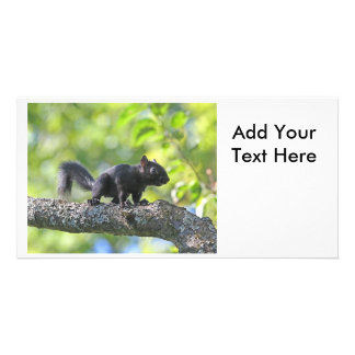 Baby Black Squirrel Photo Greeting Card