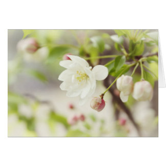 Baby Blossom Greeting Card