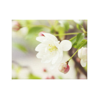 Baby Blossom Stretched Canvas Prints