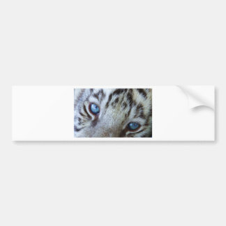 Baby Blue Eyes Bumper Sticker