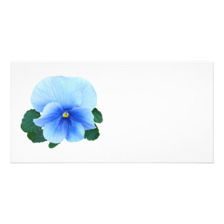 Baby Blue Pansy Picture Card