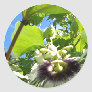 BABY BLUE SKY PASSION FRUIT FLOWER CLASSIC ROUND STICKER