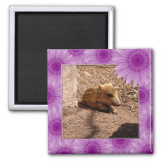 baby boar square magnet