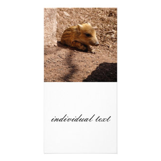 baby boar personalized photo card