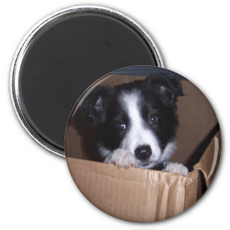 Baby Border Collie Magnet
