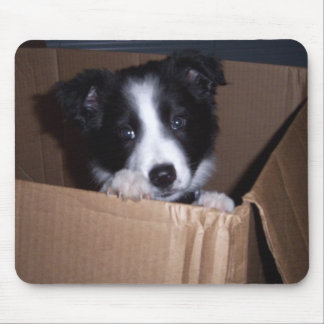 Baby Border Collie Mouse Mat