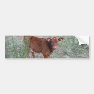 Baby Brown Cow . Bumper Sticker