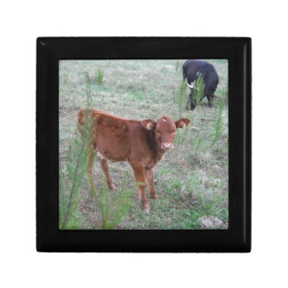 Baby Brown Cow Trinket Boxes