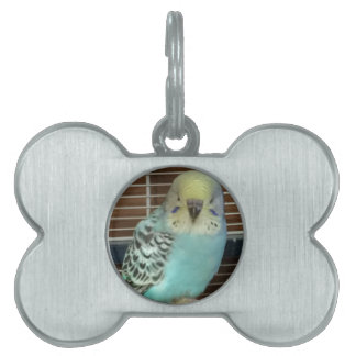 Baby budgie pet name tag