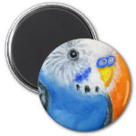 Baby Budgie Refrigerator Magnets
