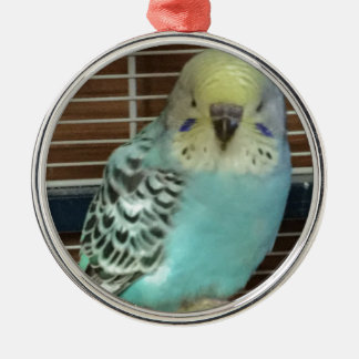 Baby budgie Silver-Colored round decoration