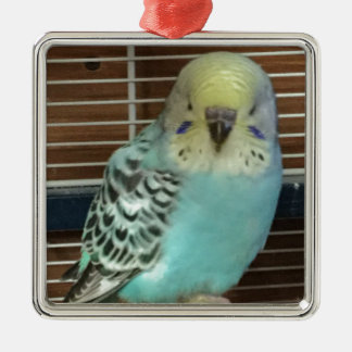 Baby budgie Silver-Colored square decoration