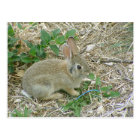 Baby Bunny And Leaf Postcard